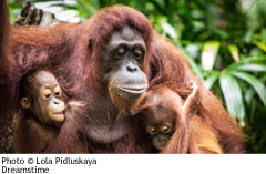 Palm Oil - Why It's Important